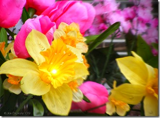 Pink Yellow Spring Flowers