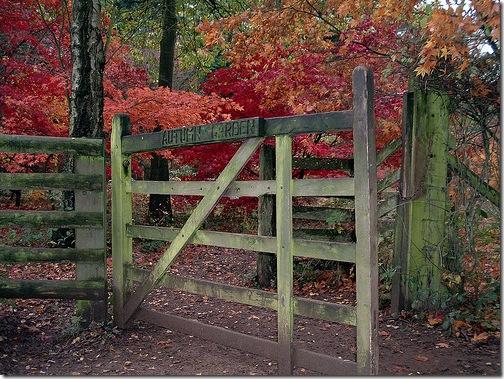 Fall Garden Woodland