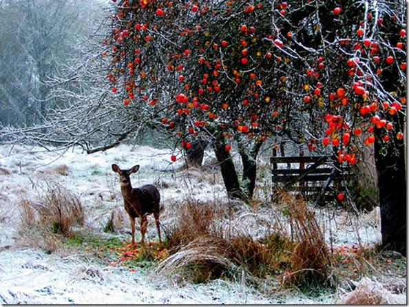 Winter scenery photos