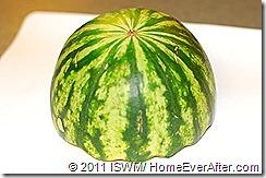 Halloween Watermelon Brain (1)-web
